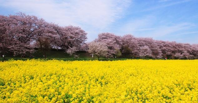 春の自律神経.png